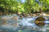 Fototapety Mountain River in the wood