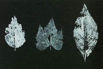 seamless leaf imprint