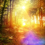 Fototapety Sunny way in forest