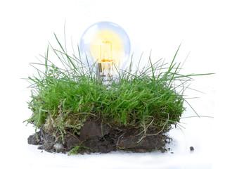 Glühbirne in einem Stück Gras, Symbol für erneuerbare Energie, n