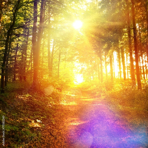 canvas print picture Sunny way in forest