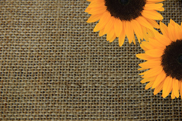 Sunflowers on burlap