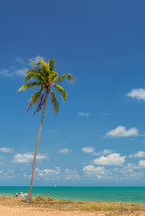 Palm trees on the beach, blue sky background.