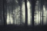 evening light in a dark misty forest