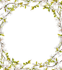 frame from white flowers on spring tree branches