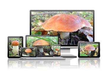 Images of mushrooms are on the screens of computer technology.