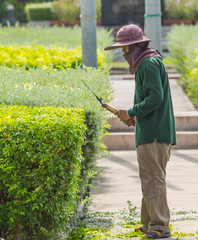 Gardener pruning an hedge.