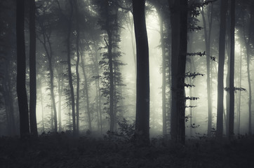 evening light in a dark misty forest