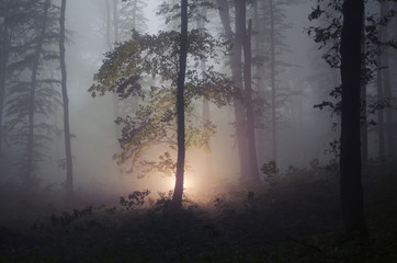 mysterious light in a dark enchanted forest