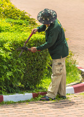 Gardener pruning an hedge.