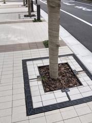 歩道と街路樹