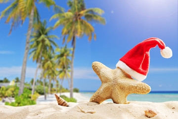 Starfish with Santa hat on it on a tropical beach
