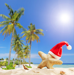 Starfish with Santa hat by the ocean