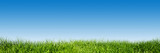 Green grass on blue clear sky, spring nature theme. Panorama poster