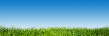 "Постер, картина, фотообои ""Green grass on blue clear sky, spring nature theme. Panorama"""