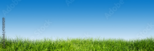 Keuken foto achterwand Lente Green grass on blue clear sky, spring nature theme. Panorama