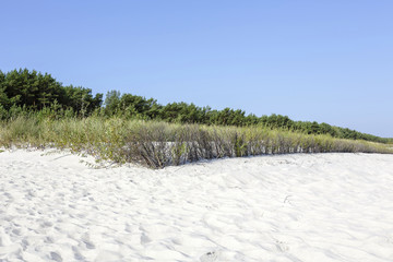 Sand dunes at the Polish Baltic coast