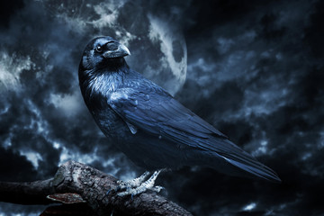 Black raven in moonlight perched on tree. Scary, creepy, gothic