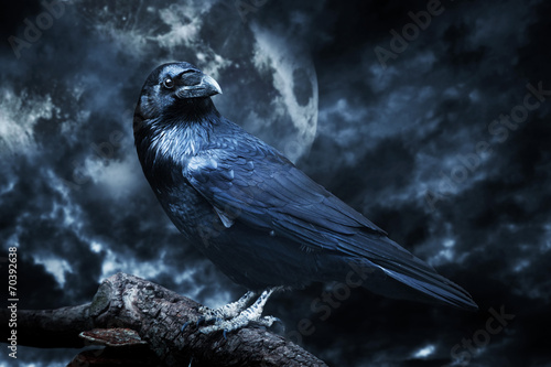 Fotobehang Vogel Black raven in moonlight perched on tree. Scary, creepy, gothic
