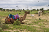 Camel, donkeys and wind power plants at Thar desert in Rajasthan