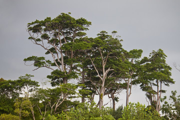 Tropical trees in India.