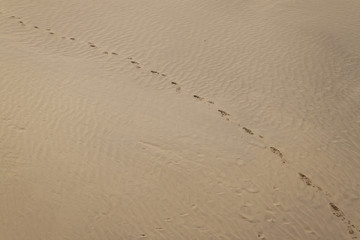Footprints in a sand at Thar desert in Rajasthan, India