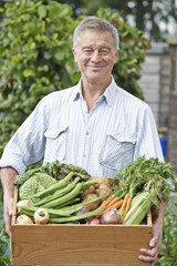 Senior Man On Allotment With Box Of Home Grown Vegetables