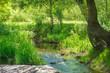 Leinwandbild Motiv Stream in the tropical forest