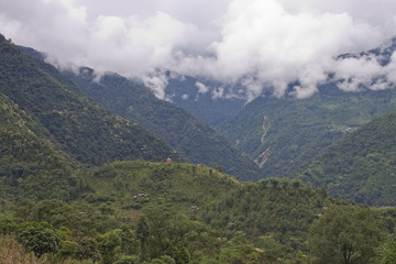 Rain forest covering mountains in Sikkim, India