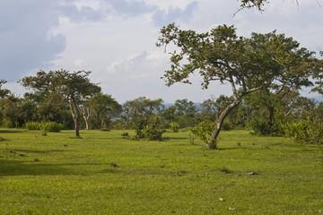 Landscape in Mudumalai National Park, India