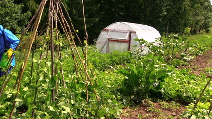 Peasant farmer man spray potato plants in garden with pesticides