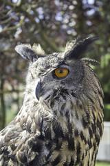Owl falconry