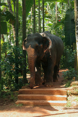 Elephant in tropical forest