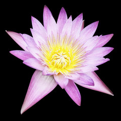 Lotus isolated on black with clipping path.