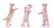 Katzenbaby steht