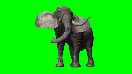elephant looks around and attack 2 - green screen