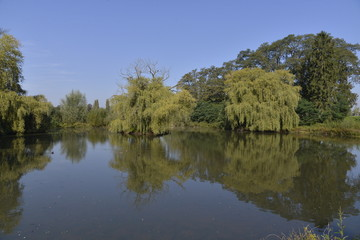 Le petit étang abandonné à Hofstade