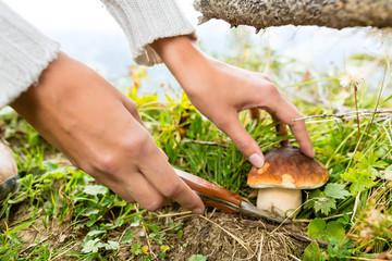 Junge Pilzsucher mit Steinpilz