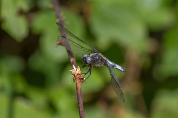 A Dragon fly warming up in the sun.