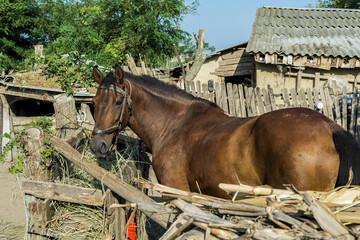 Brown horse at romanian farm