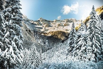 bosco dopo una nevicata