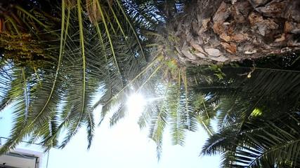 palmtrees on maldives