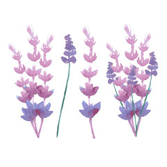 vector watercolor lavender delicate bunch