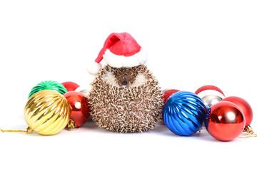 Hedgehog celebration.