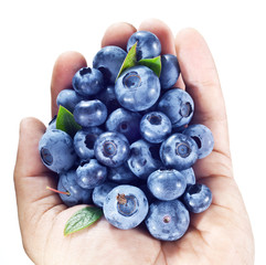 Blueberries in the man's hand over white.