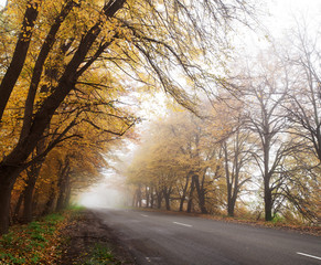 Highway in the autumn forest. Fog.