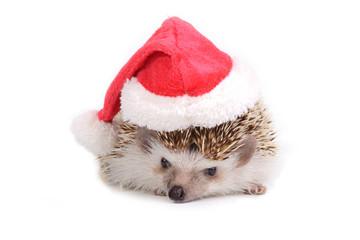 Hedgehog with santa claus hat.