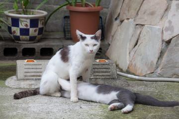 野良猫の授乳