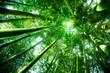 bamboo forest - zen concept - 70423275