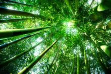 forêt de bambous - notion zen